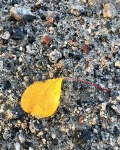 image of leaf on ground